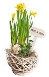 Abbildung des Angebots bepflanztes Kugelkörbchen
