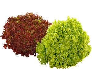 Abbildung des Angebots dtsch. »Lollo Rosso«, »Lollo Bionda« oder Eichblattsalate