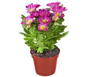 Abbildung des Angebots Sommerlicher Blühmix
